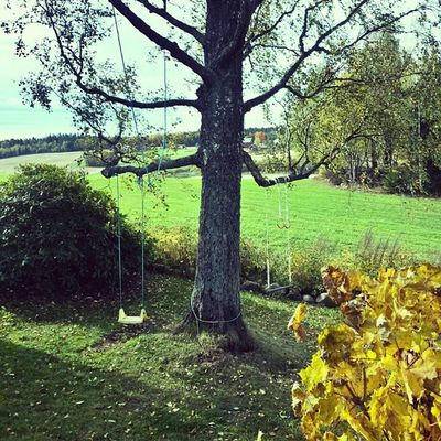 Ilovenorway Ilovenorway_akershus Follo   ås worldunion wu_norway autumn høst swings husker ig_week_autumn