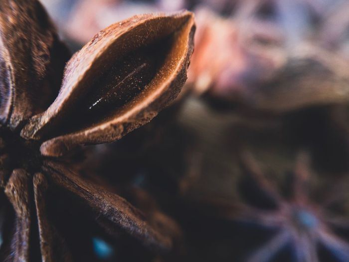 Cropped image of star anise
