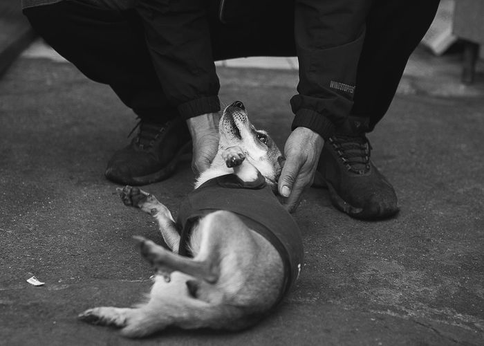 Adult Black And White Blackandwhite Day Dog Domestic Animals Human Body Part Human Leg Korea Low Section Mammal Men One Animal Outdoors People Pets Police Uniform Real People Sitting Two People