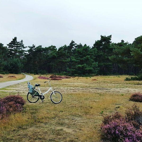 Hogeveluwe Arnhem Thenetherlands Nationalpark