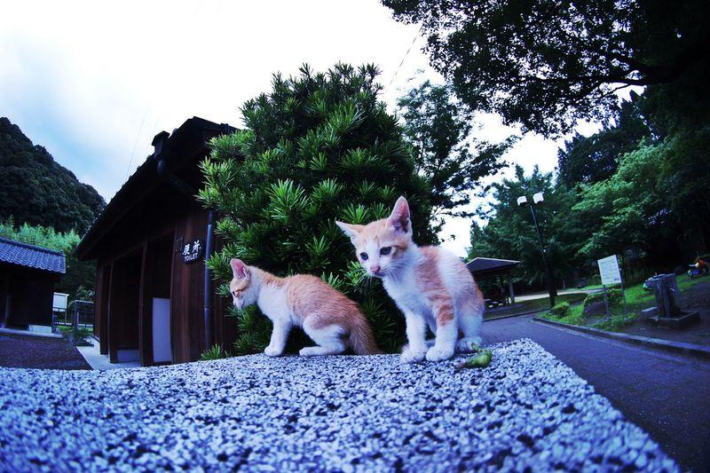 Cats Kitten