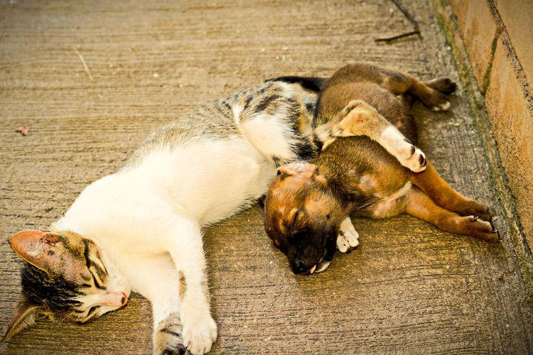 Dog  and kitten lying on floor