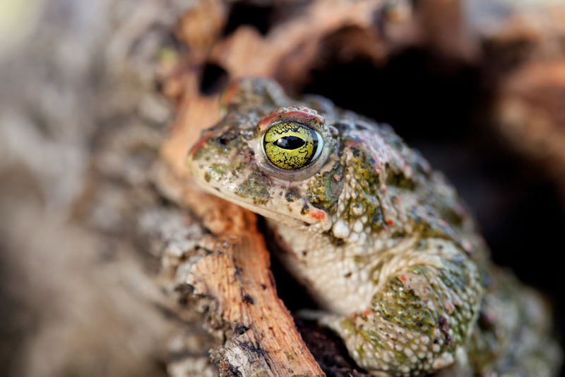 Close-Up Of Frog In Wood
