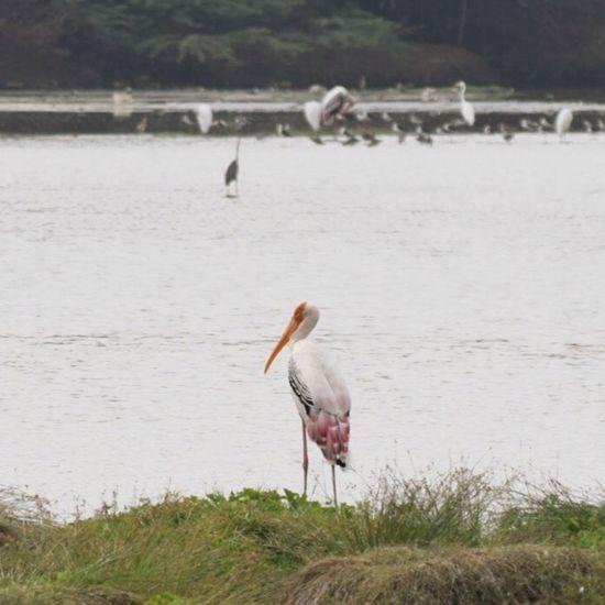 Check This Out Bird Bird Photography First Eyeem Photo Nikonphotography Bird Watching Birds Of EyeEm