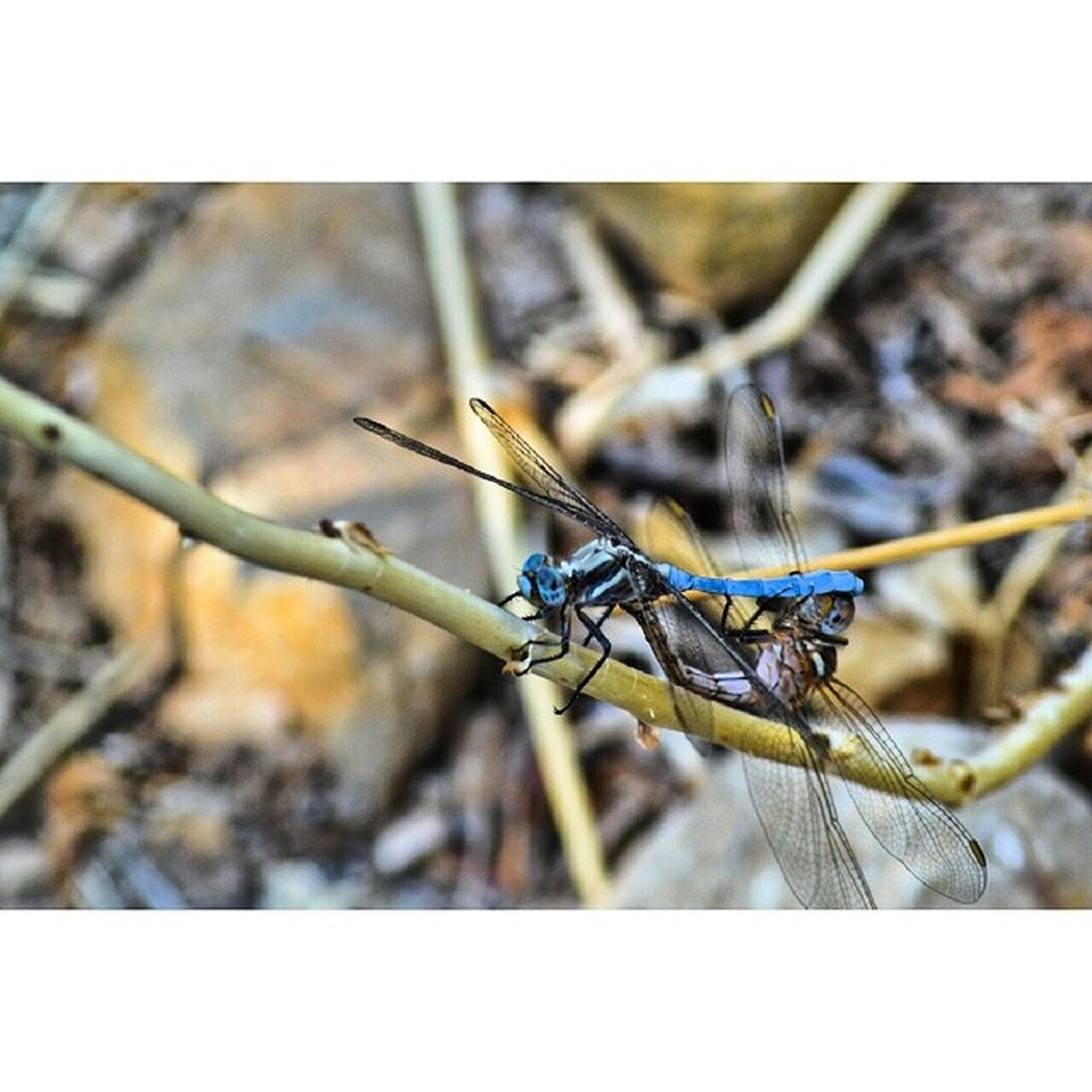 animals in the wild, animal themes, one animal, wildlife, insect, transfer print, perching, auto post production filter, focus on foreground, bird, close-up, full length, selective focus, nature, dragonfly, zoology, day, twig, outdoors, no people