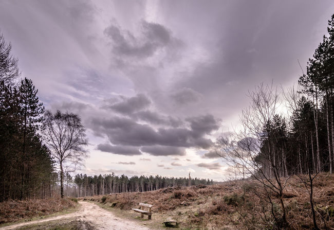 Desolate landscape Barren Bench Britain Clouds Desolate Dramatic Sky England Forest Landscape Nature No People Outdoors Outdoors Photograpghy  Road Season  Spring Tree Uk Wilderness WoodLand