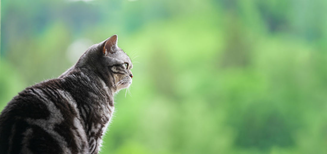 Side view of a cat looking away