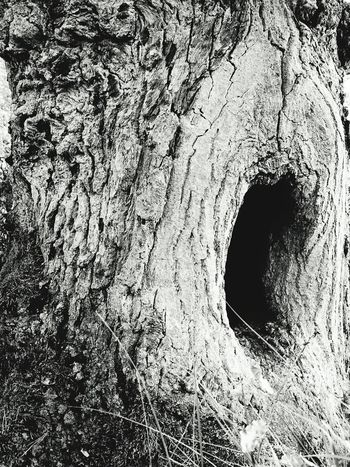 Close-up Tree Trunk Textured  Tree Rough Full Frame Growth Extreme Close-up Nature Weathered No People Tranquility black&white Duvenstedt Germany