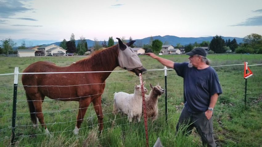 My Dad, King of the Goats Sheep and Horse Horse Photography  Horse Love Horselover , took on a random Walking Around , hope you enjoy' Adam O