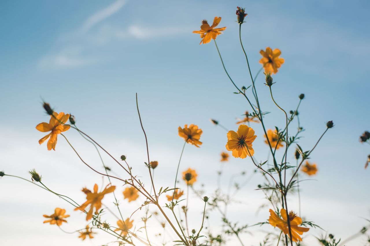 Low angle view of yellow flowers growing against sky