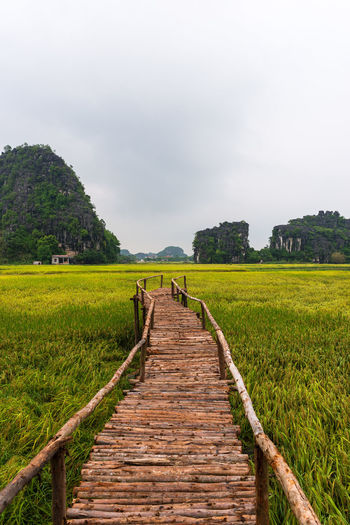 Plant Sky Nature Land Scenics - Nature Field Green Color Environment The Way Forward Day Landscape Agriculture Beauty In Nature Growth Rural Scene Wood - Material Footpath Outdoors No People Rice Rice Paddy Vietnam Tam Coc Cloudy Mountains Direction Perspective Travel Destinations Travel