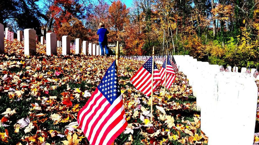 Flags For Vets Paying Respects War Veterans Fall Beauty Fall Colors Louisville, Kentucky
