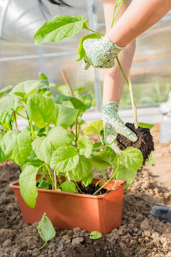 Midsection of woman holding potted plant
