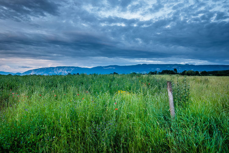 Cloud - Sky Sky Plant Beauty In Nature Scenics - Nature Grass Field Green Color Environment Tranquil Scene Nature Landscape Land Tranquility Growth Day Non-urban Scene Idyllic No People