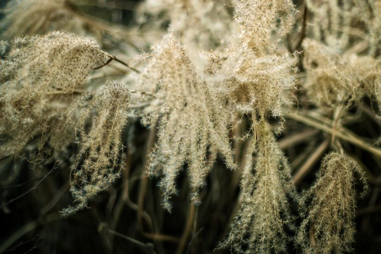 Close-up of frozen plant on field