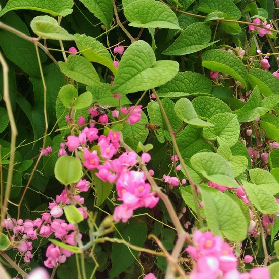 Nature Plant Green Color Beauty In Nature Flower No People Close-up Abelhas Pink Color Growth Leaf Freshness Fragility Day Outdoors