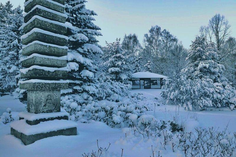 Travel City Landscape Landscape_photography Landscape Nature Winter Wonderland Wintertime Winter Wnter Gardens Cold Winter ❄⛄