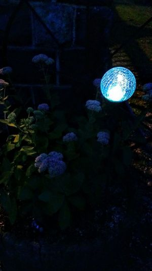 Love Solar Lights! Night Illuminated Blue Close-up Beauty In Nature Plant Outdoors Nature My Yard