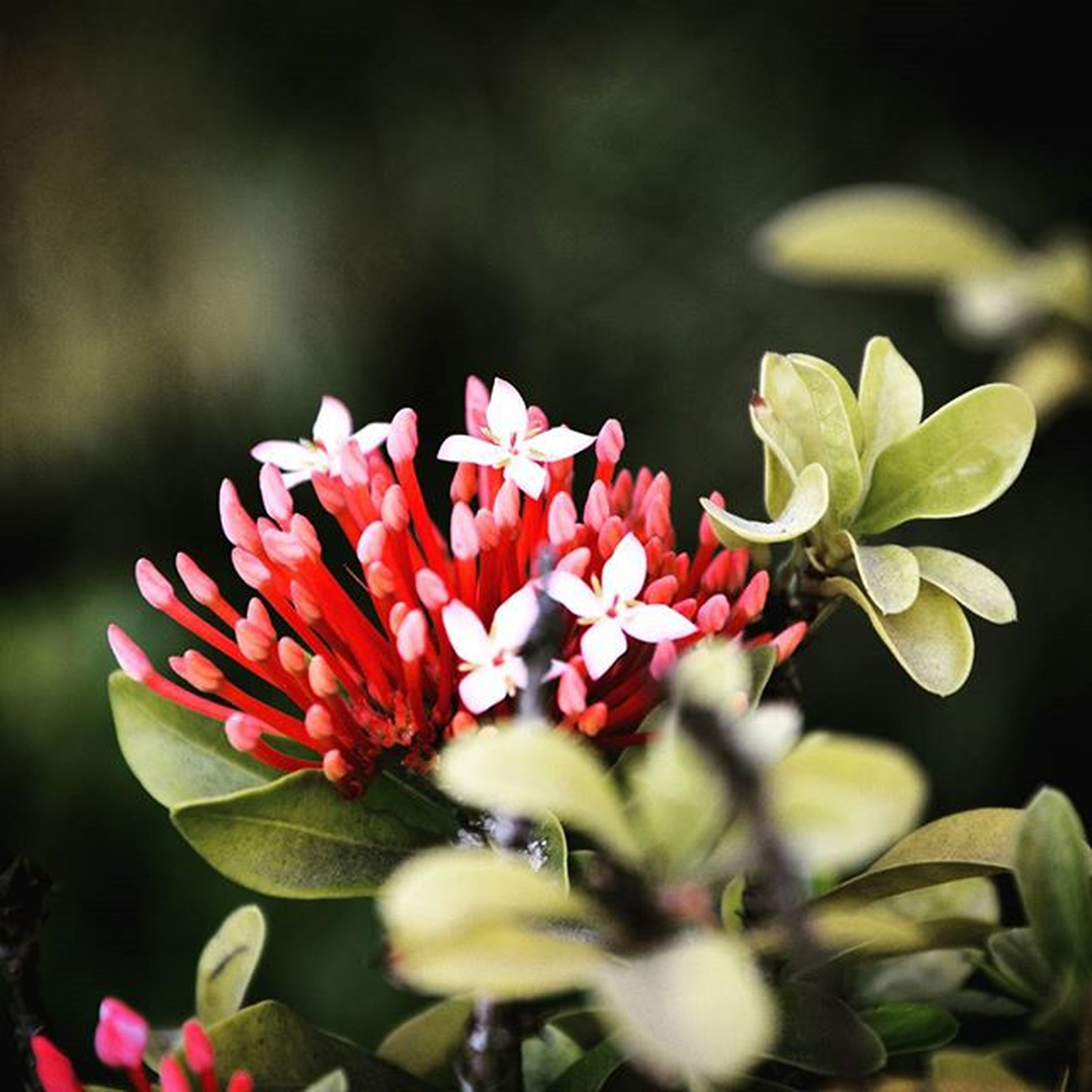 flower, petal, freshness, fragility, growth, flower head, focus on foreground, close-up, beauty in nature, plant, nature, blooming, bud, in bloom, selective focus, stem, park - man made space, blossom, day, botany