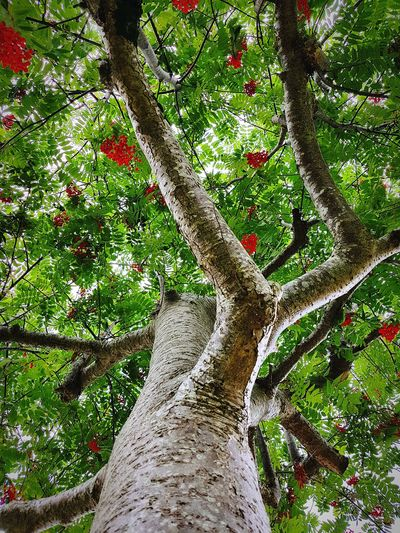 Tree Low Angle View Branch Growth Nature Day Outdoors Tree Trunk No People Forest Beauty In Nature Close-up Sky