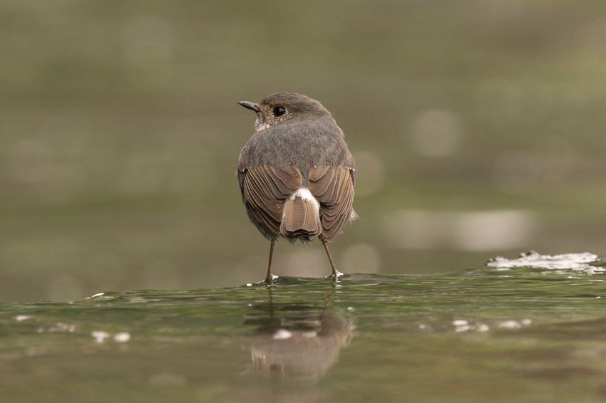 Sigma 150-600c Sony A7RII Hong Kong Plumbeous Water Redstart Bird One Animal Animal Themes Animals In The Wild Perching Focus On Foreground Animal Wildlife Waterfront Beauty In Nature Nature Outdoors Water Close-up No People Day