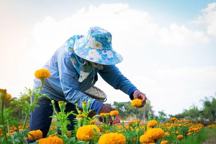 Marigold Hand Farm Farmer Working Cut Plant Outdoor Yellow