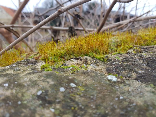 Little Planet Nature Photography Moss Green Color Stone Outdoors Day Nature No People Grass Close-up Beauty In Nature