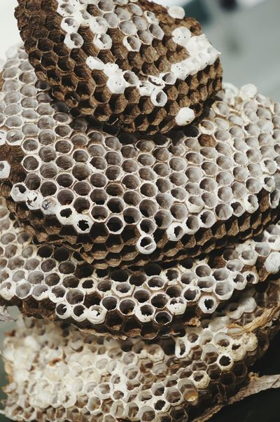Honeycomb Pattern Close-up Nature No People Day Animal Themes Outdoors Symmetry Wasp Nest Multistory