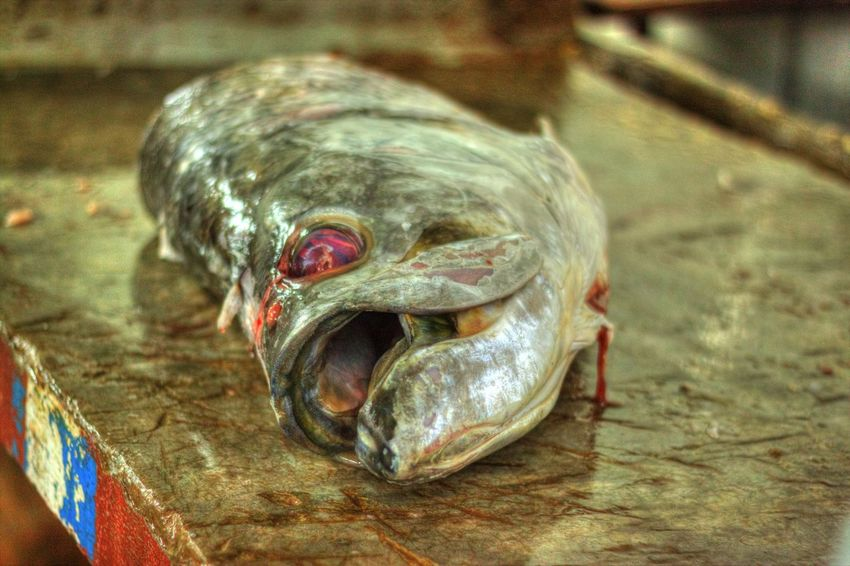 Close-up Fish Fishhead FishMarket Fresh Fish Marketplace Outdoors Seafood Market SEAFOOD🐡