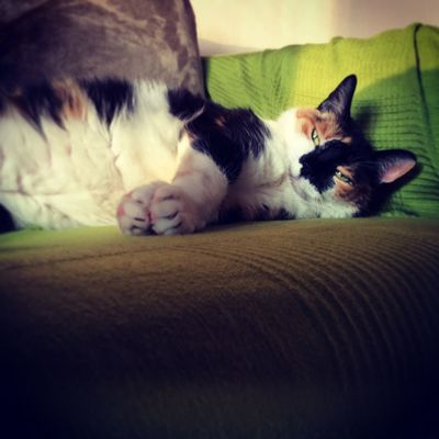 Cat I Love My Cat ❤ Afternoon Lazy