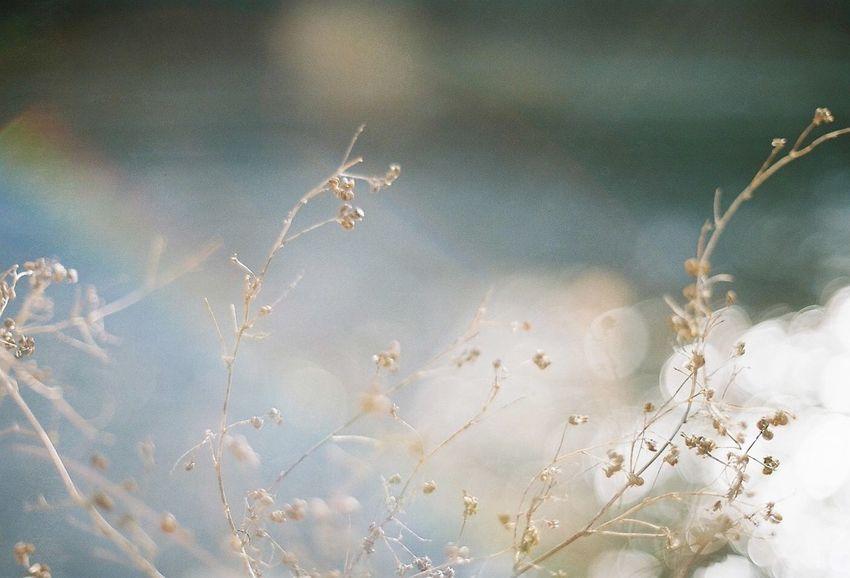 Filmphotography Camera Winter 35mm Film Eyemphotography Film EyeEm Nature Lover Photography
