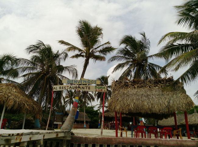 Tree Palm Tree Vacations Travel Destinations Tourism Vive Colombia Viaja Por Ella Colombia Archipielago Outdoors Travel Sky Sand Palm Tree Caribeanlife