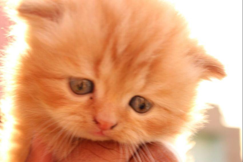Cat My Cat Cute Pets #lips #love #smile #pink #cute #pretty