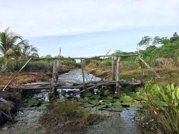 Old bridge & nature Wallpaper Grass Tree Scenics Tranquil Scene Landscape Growth Beauty In Nature Day Cloud - Sky Outdoors No People Tranquility Nature Water Sky Old Bridge Wooden Travel Destinations Travel Photography Tourist Attraction  Attraction EyeEmNewHere