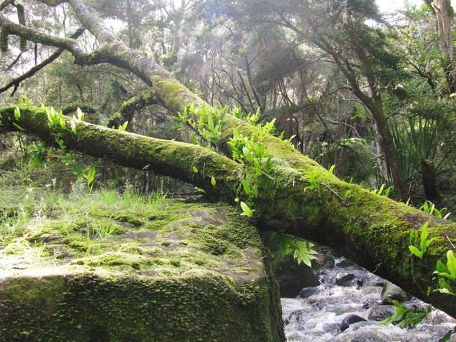 New Zealand Rainforest Green Green Green!  Things That Are Green Wildlife & Nature Mystery Forest In The Forest Hidden Places Growth CIRCLE Of LIFE