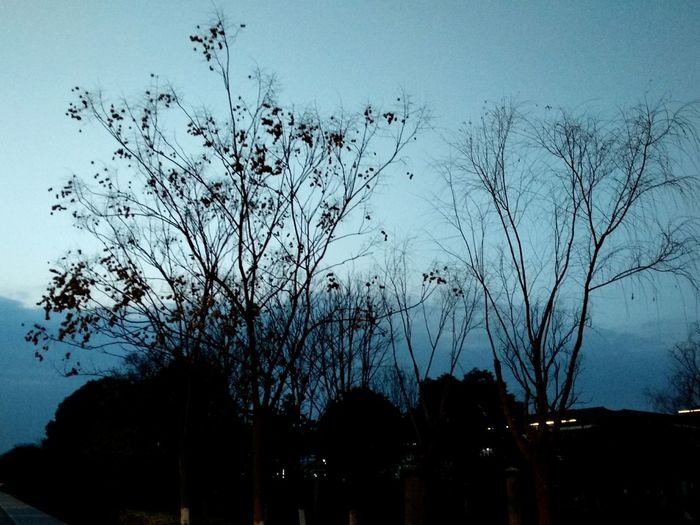 Tree Night Sky Nature
