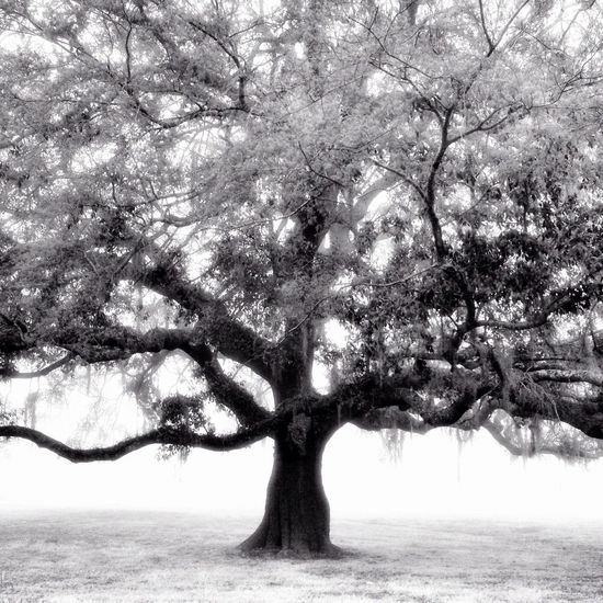 NEM Black&white AMPt_community EyeEm Best Shots-Trees- TreePorn Shootermag