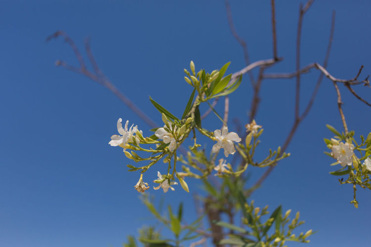 Close-up of plant against clear blue sky