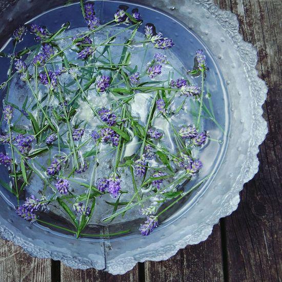 Lavender aroma In My Garden On My Porch Herbs Lavender Summertime Aroma Aromatic Herb Aromatic Plants Purple Flower Metal Flower Pot Purple Favorites Floating On Water in Sweden