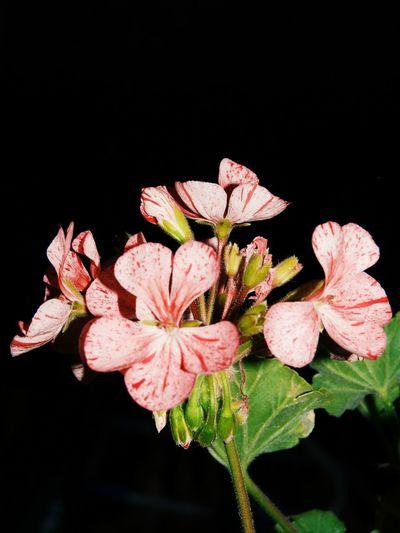 il mio mondo... I Love Flowers ♥ Flower Power Pink Myfavoritecolor