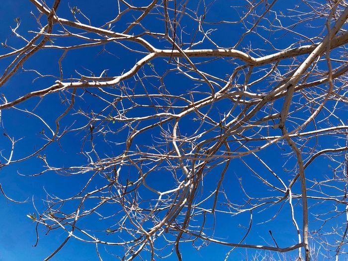 Tree Sky Blue