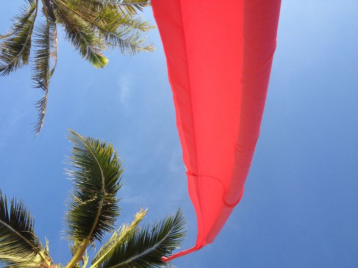 Landscapes With WhiteWall Summer Looking Up Palm Trees Blue Sky Red Flag Looking Up Can Be So Rewarding At The Beach Enjoying Life Feeling Calm Wind Blowing  Such A Lovely Moment in Koh Samui Thailand Vacation Spotted In Thailand Showcase April BYOPaper! Perspectives On Nature