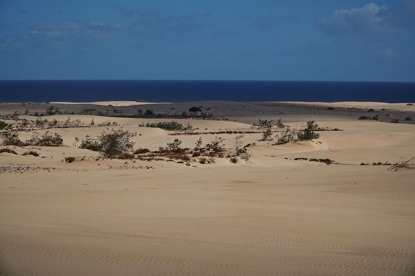 Fuerteventura Arid Climate Beauty In Nature Blue Clear Sky Corralejo, Fuerteventura Day Desert Horizon Over Water Landscape Nature No People Outdoors Remote Sand Sand Dune Scenics Sea Sky Tranquil Scene Tranquility Water