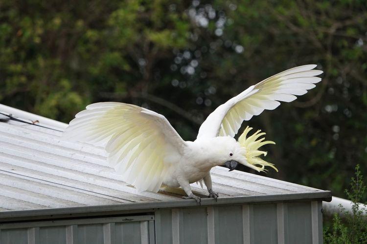 White bird flying