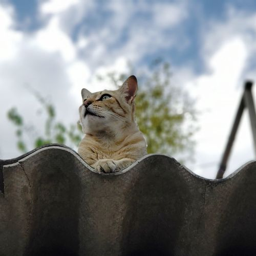 Close-up of a cat against sky