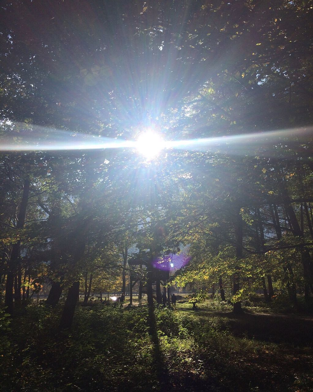 tree, sunbeam, sun, lens flare, sunlight, nature, beauty in nature, tranquility, tranquil scene, growth, forest, scenics, outdoors, no people, day, tree trunk, landscape, branch, sky