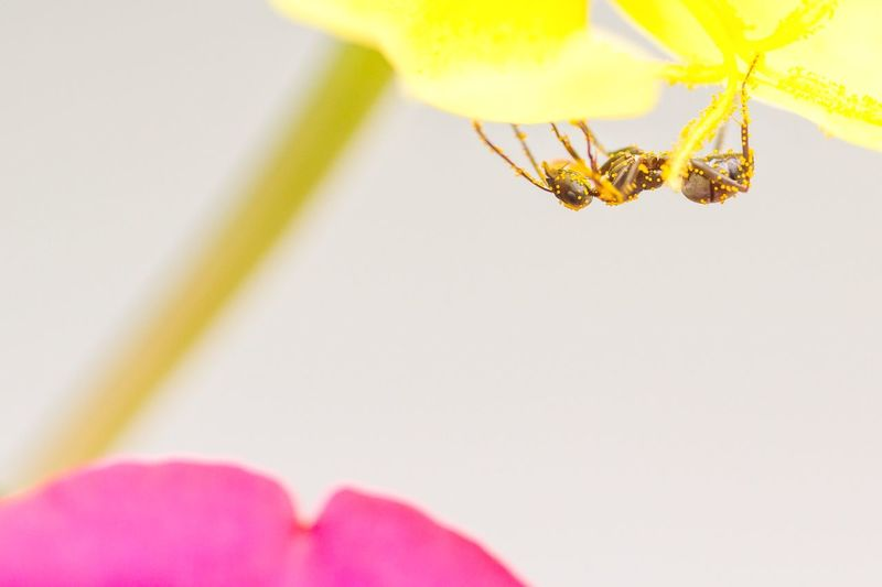 Ant test day 2 Sigma 180mm F2.8 Ants Macro Insects Minimalism Flowers Nature On Your Doorstep Nature_collection
