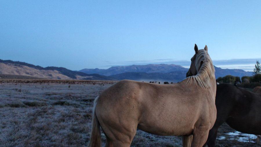 A backward glance before the day begins... Horse Blue Arid Climate Morning Light EyeEm Best Shots TheWeekOnEyeEM Tadaa Community Beauty In Nature Horse Photography  EyeEm Selects Eye4photography