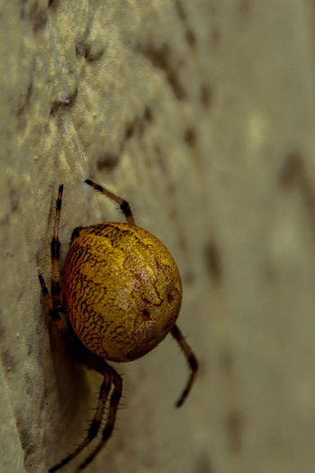 Arachnids Best