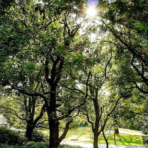 Relaxing Enjoying Life Picnic 国立昭和記念公園
